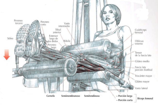 curl femoral sentado en maquina