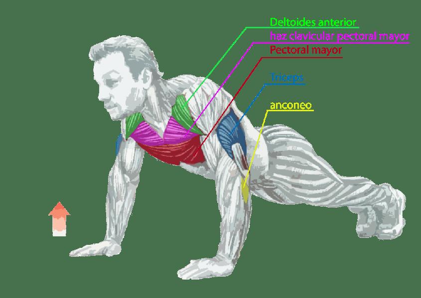 ENTRENADOR-PERSONAL-PRO-ENTRENAMIENTO-PERSONAL-ENTRENADORES-PERSONALES-flexiones-de-brazos-en-el-suelo