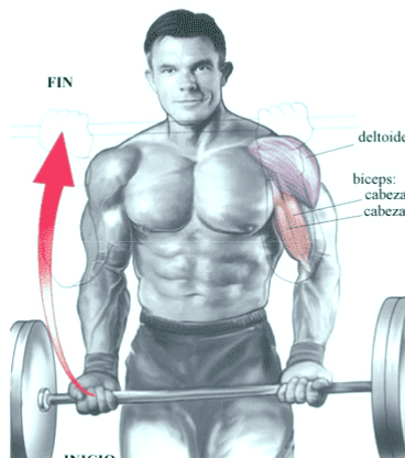 curl de bíceps en barra