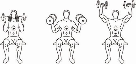 Como se hace el Arnold Press