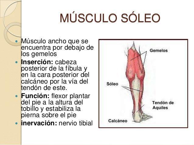 msculos-de-la-pierna-10-638