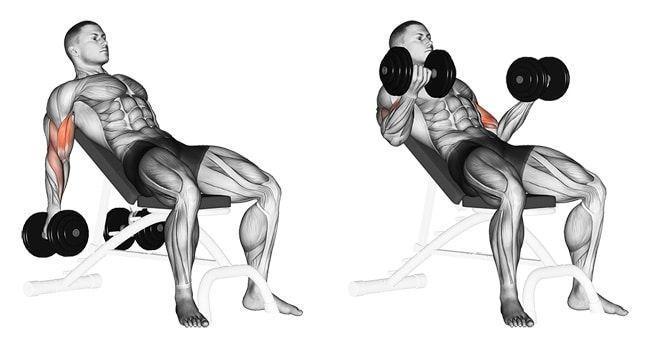 Curl bíceps inclinado con mancuerna musculso que implica