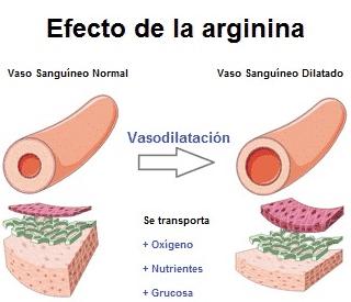 efecto de la arginina