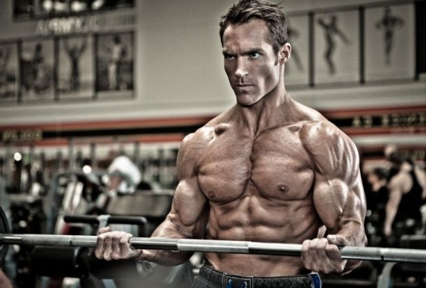 musculo en grasa