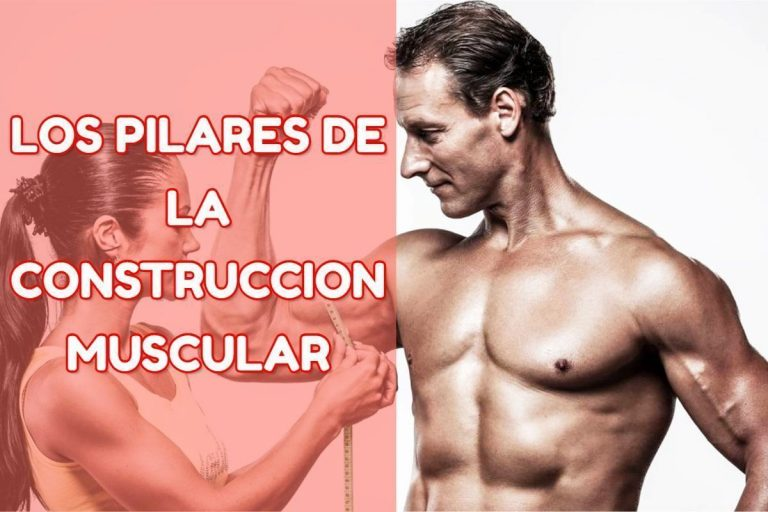 aumentar musculo