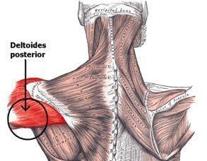 Remo para deltoides posteriores