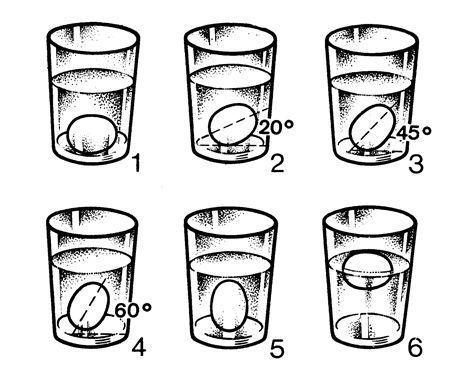 posicion huevo