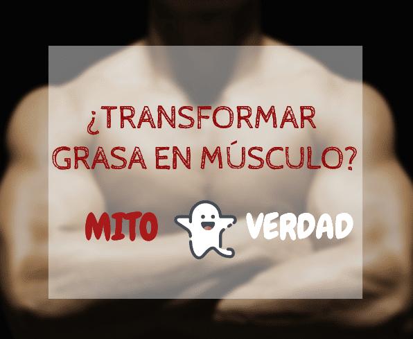convertir grasa en musculo