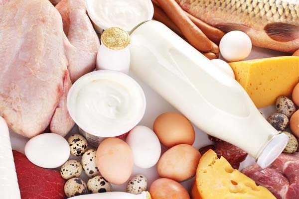 proteina puede ayudar a perder peso