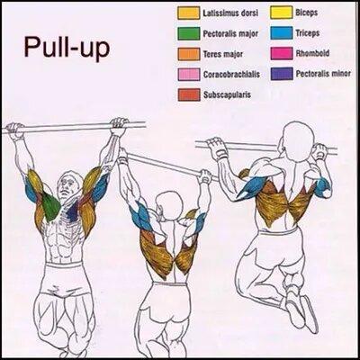musculos que intervienen en dominadas