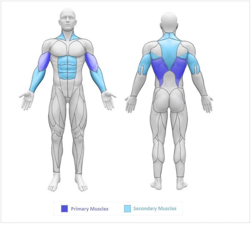 musculos que utiliza la dominada neutra